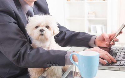 Pets In The Workplace- A Good or Bad Idea???